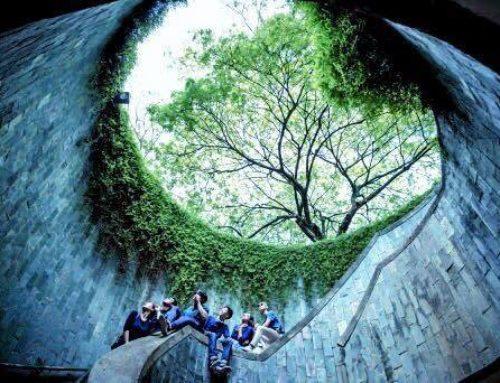 สวยมาก! อุโมงต้นไม้ที่ Fort Canning Park สถานที่สุดฮิปของชาวอินสตาแกรม และคนที่รักการถ่ายภาพในสิงคโปร์